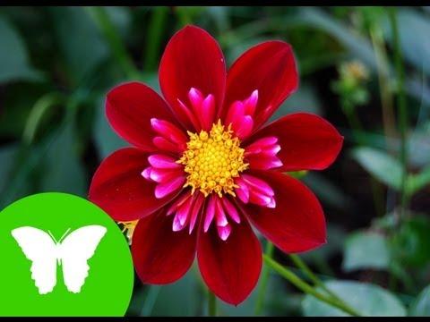 La Eduteca - Las plantas: tipos, relación y reproducción