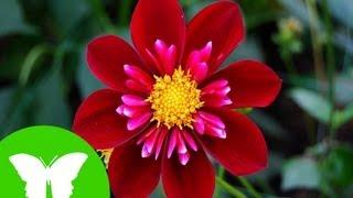Conocimiento del medio: Tipos de plantas, reproducción y relación.