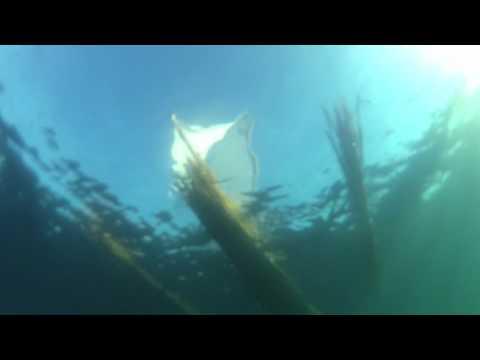 Gaubeja en mar dessouto
