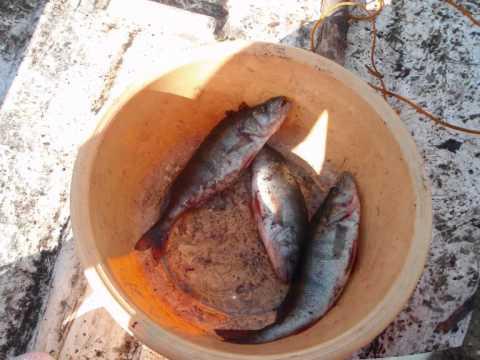 Kooste kaloista(2009 ja 2010)