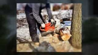 24 Hour Emergency Tree Removal Toronto (647)931-1519