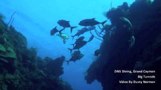 DNS Diving, Big Tunnels, Grand Cayman