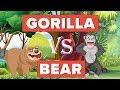 Gorilla vs Bear Who Would Win Animal Comparison