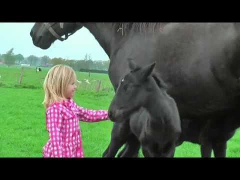 Belgian Draft Horse twin: Fien and Lisa van 't Akkerhof