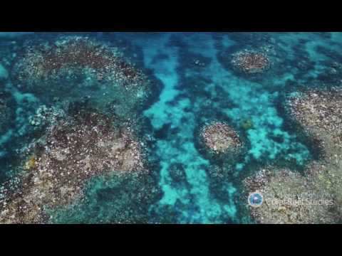 Great Barrier Reef Bleached