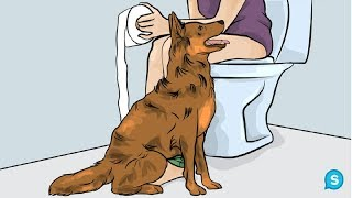 This Is Why Dogs Follow You Into The Bathroom. I Never Knew This!