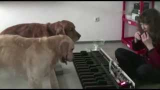 Flohwalzer - piano dogs.mp4