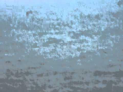 طائر النورس بشواطئ تمسمان