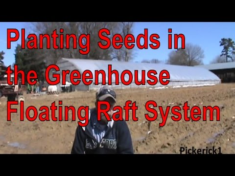Planting Seeds in The Greenhouse Floating Raft Hydroponic System Mckinney Tobacco
