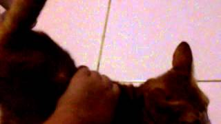 klw di elus2x pantat nya naek view on youtube.com tube online.