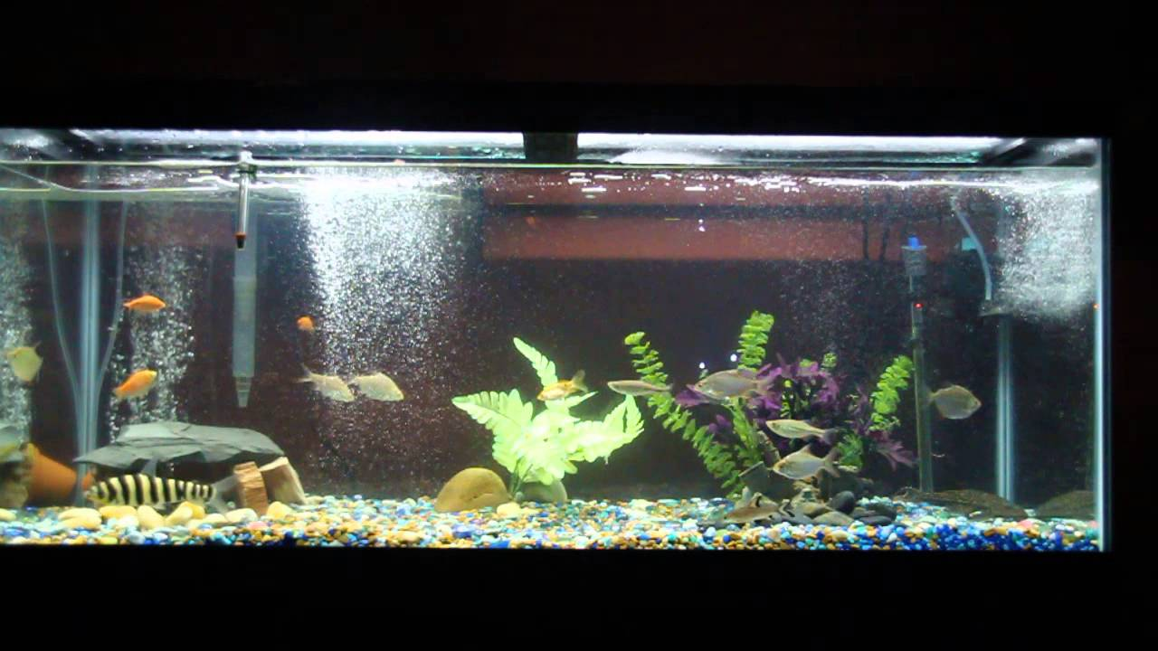 75 gallon fish tank youtube 75 gallon saltwater fish for Youtube fish tank