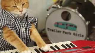 Keyboard Cat Still Has The Touch