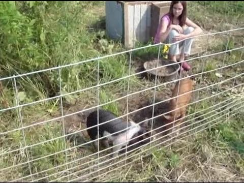 Raising Pigs Without Smell And On The Cheap Youtube