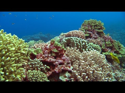 Pitcairn's Pristine Environment | Pew