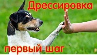 Видео - Дрессировка собак первое вводное занятие по ОКД