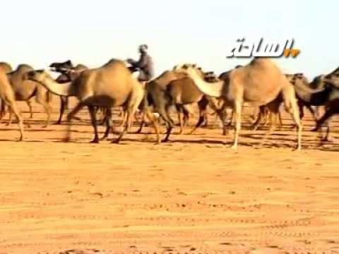 منقية / علي بن محمد العجواني السبيعي  (رحمه الله)
