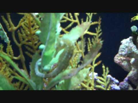 Houston Aquarium Printable Coupons