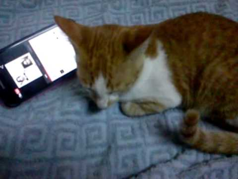 Cat listening to kadazan music?!