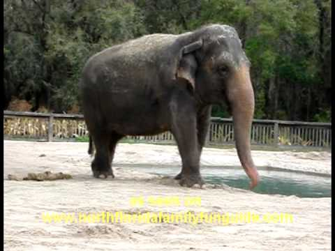 Central Florida Zoo And Botanical Gardens Sanford Florida Youtube