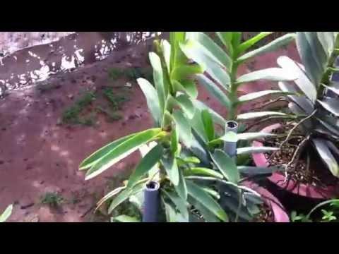Vườn hoa lan đẹp, vườn hoa lan mokara 0918448072