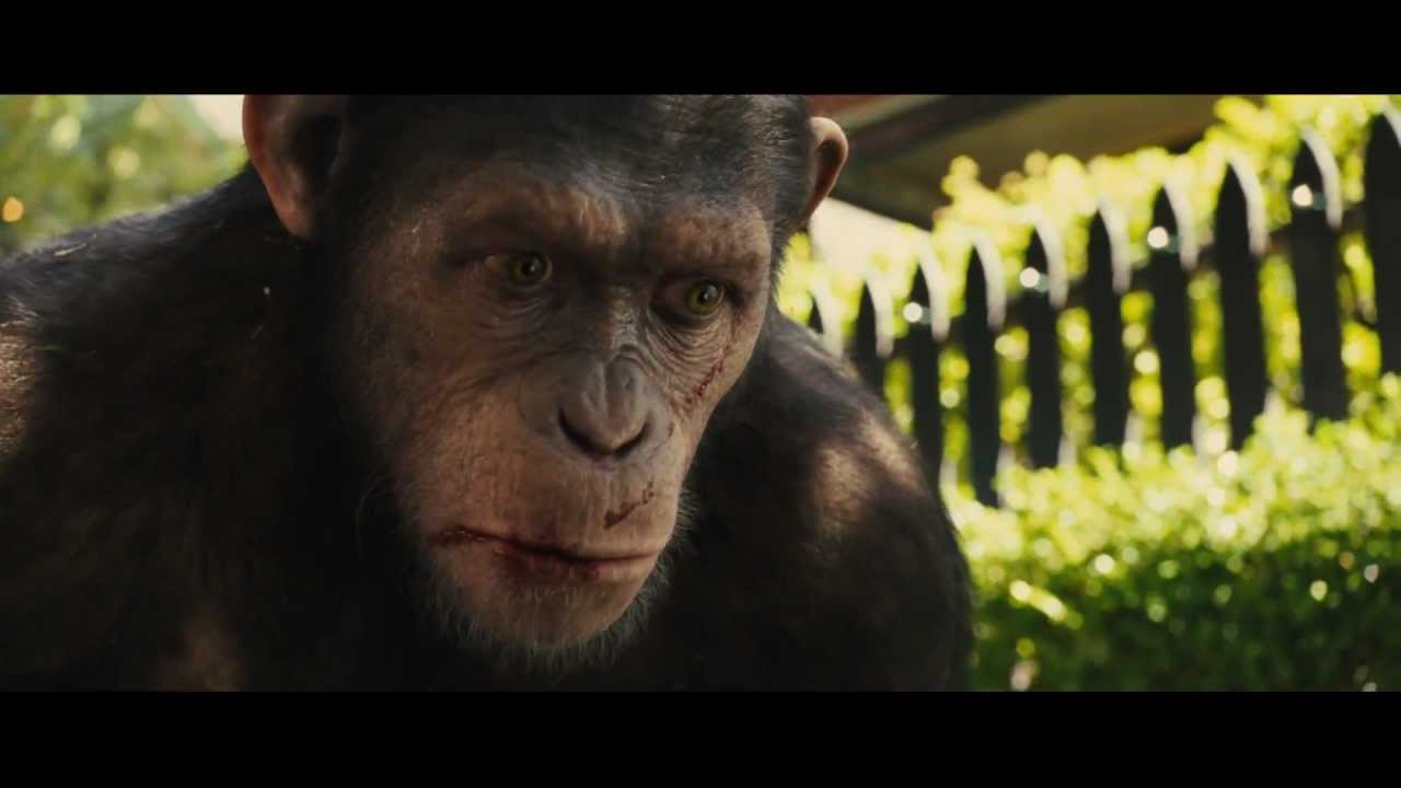 Caesar Monkey Drawing Reminder That Caesar is an