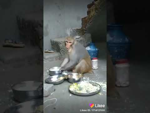 Funny monkey and video