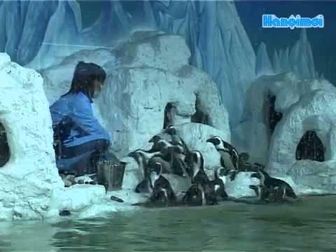 Hình ảnh tuyệt đẹp trong thủy cung lớn nhất Việt Nam