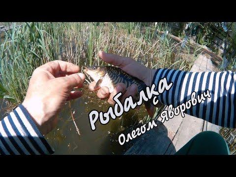 в стране рыбалке видео