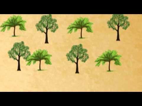 Florestamento e Reflorestamento