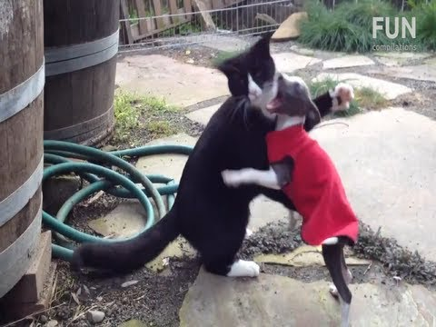 Funniest Cat vs Dog Fighting Videos