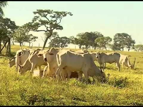 Febre aftosa - Produtores rurais têm até 31 de maio para vacinar rebanho