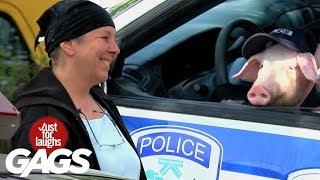 Policia cerdo
