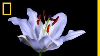 Assista flores desabrocharem diante de seus olhos