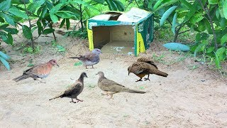 Strange Bird Trap Using Paper triggers - How to Make Bird Trap Work 100%