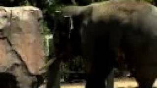 Bull Elephant Introduced to New Home-Cincinnati Zoo