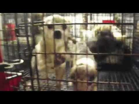 0 Knox County Ohio Puppy Mill