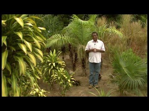 Curso Como Montar um Viveiro de Plantas Ornamentais - Matrizeiros - Cursos CPT