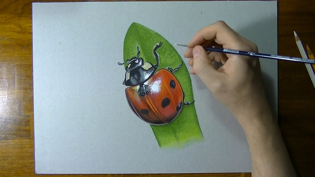 Realistic ladybug drawing - photo#4