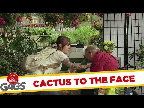 Old Man Cactus TO THE FACE!