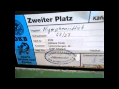 Zweite Platz Landesverbandsschau Schwarzwald