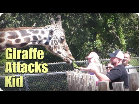 Giraffe Attacks Kid At Zoo!!!