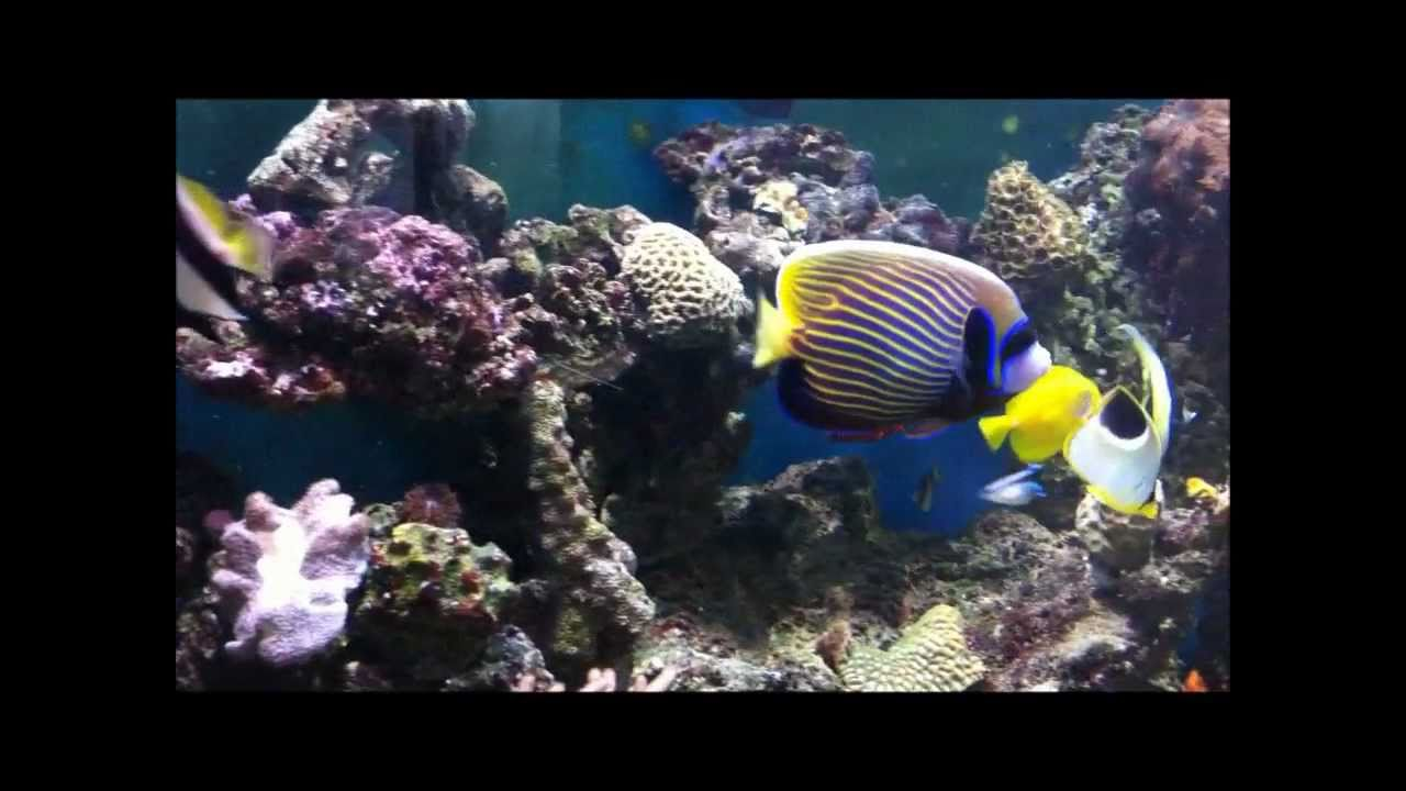 Saltwater fish tanks on youtube dave 39 s marine fish tank for Youtube fish tank