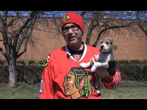 Thumbnail image for 'Blackhawks Support Pet Adoption'