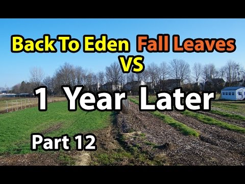 Back to Eden Gardening Method  Soil 101 with Wood Chips vs Leaves Composting G. Series # 12