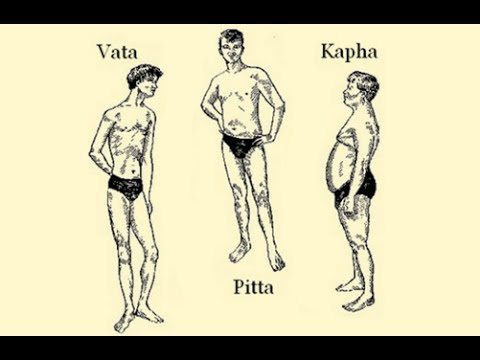 The Ayurvedic Body Types and Their Characteristics (Vata Pitta Kapha)