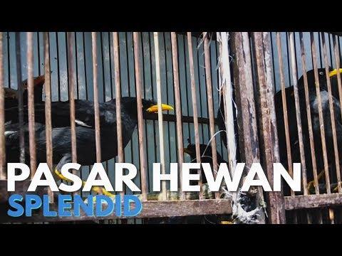 Pasar Hewan Splendid Kota Malang