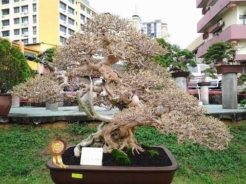 Cây cảnh - Các thế cây đẹp nhất Việt Nam