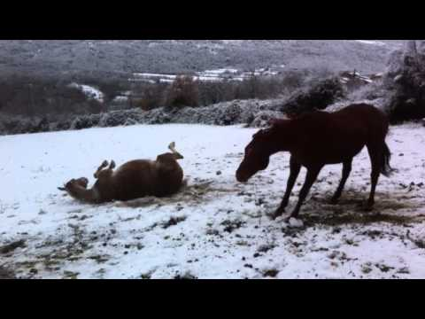 Video Revolcada en la nieve Autor: Imgagen Miniatura Youtube