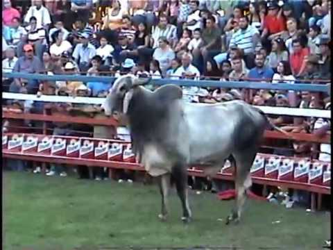JARIPEO EN SAN JUAN OPICO (corneada del toro al torero)