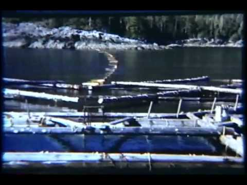Ed Bilderback Commercial Fishing in Alaska Early Days (late 1940′s early 1950′s)